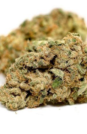 Charlotte's Web Marijuana UK