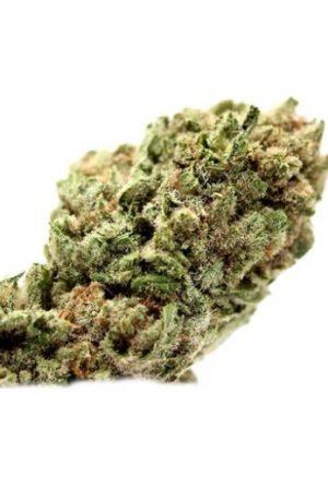 Vortex Weed Strain UK