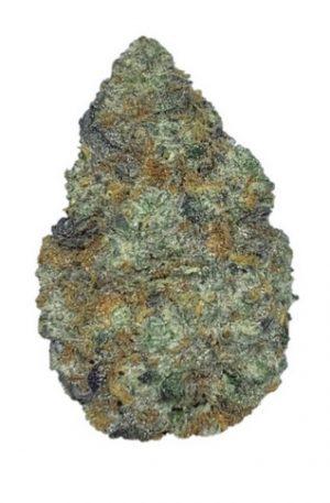 Buy SFV OG Cannabis UK (33.7% THC)
